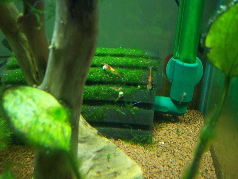 Mes 5 aquariums 100_5220