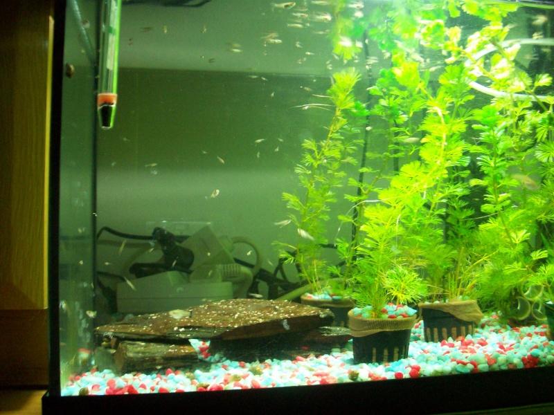 Mes 5 aquariums 100_5221