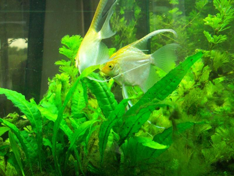 Mes 5 aquariums 100_5226