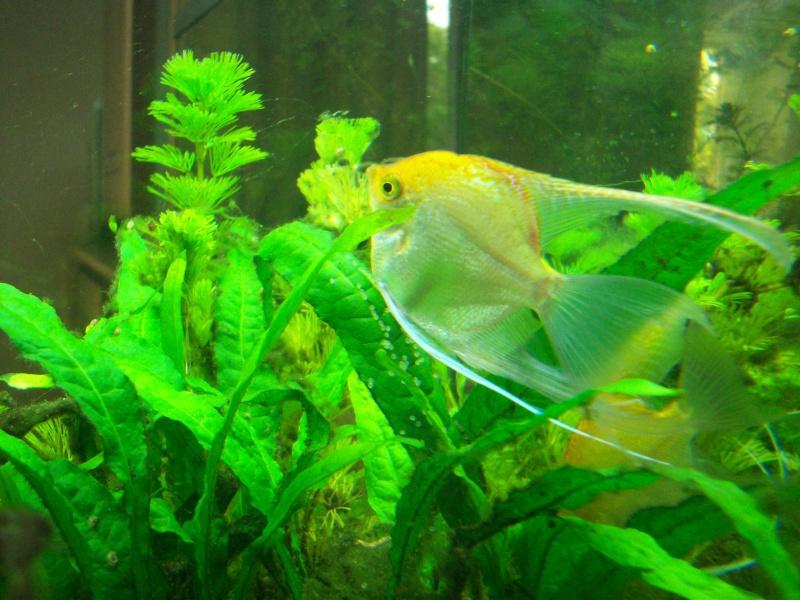 Mes 5 aquariums 100_5227