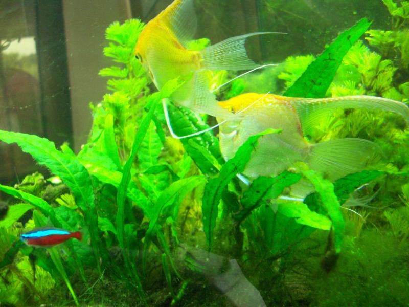 Mes 5 aquariums 100_5228
