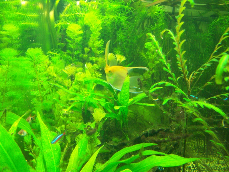 Mes 5 aquariums 100_5310