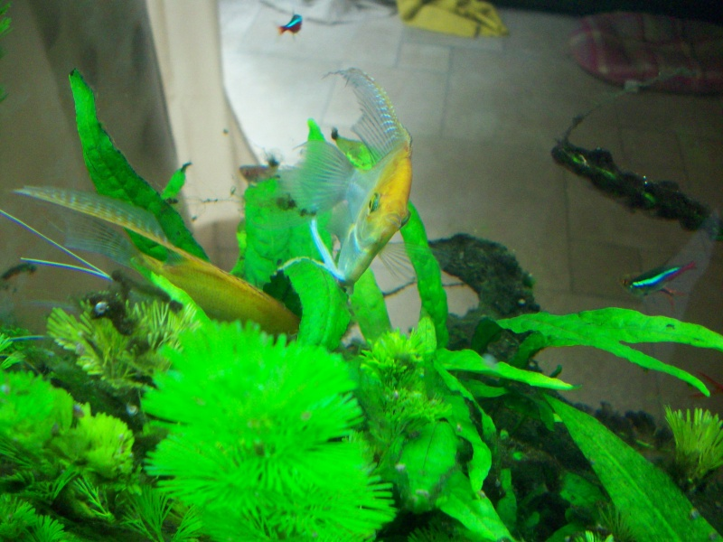 Mes 5 aquariums 100_5311