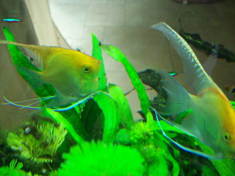 Mes 5 aquariums 100_5312