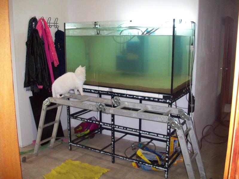 Mes 5 aquariums 100_5321