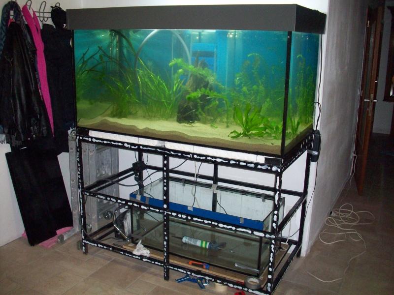 Mes 5 aquariums 100_5323