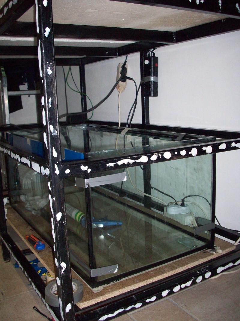 Mes 5 aquariums 100_5324