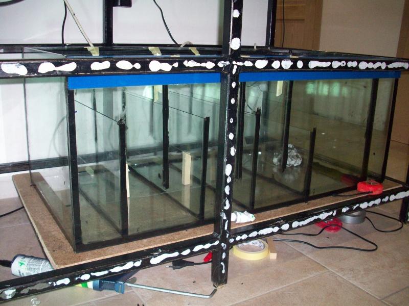 Mes 5 aquariums 100_5326