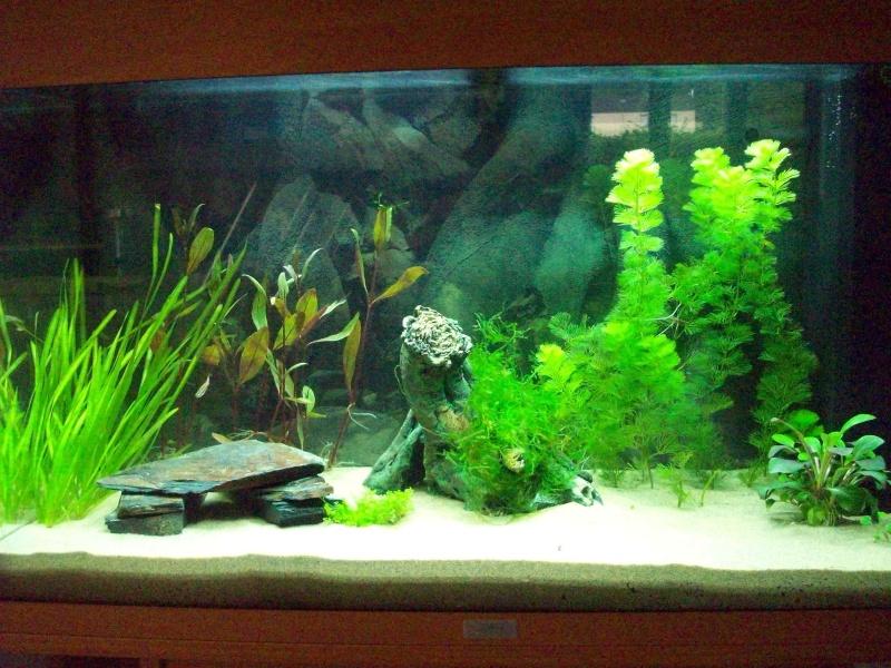 Mes 5 aquariums 100b4110