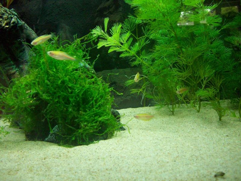 Mes 5 aquariums 100b4410