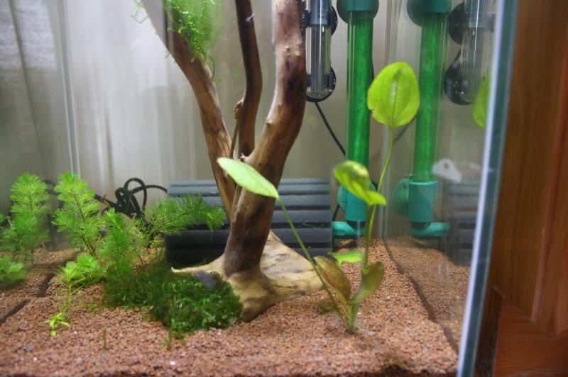 Mes 5 aquariums Img_6310