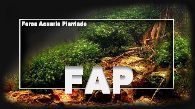 Búsqueda avanzada Logo_f11