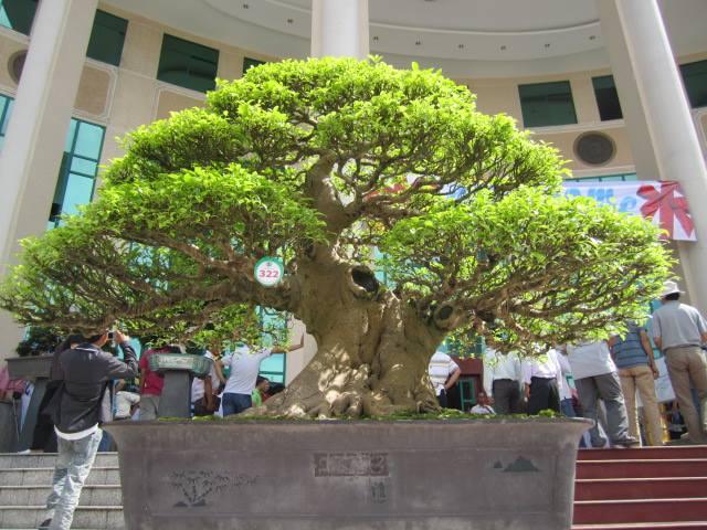 Vietnam International bonsai show - Page 3 12086110