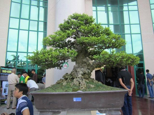 Vietnam International bonsai show - Page 3 12390511