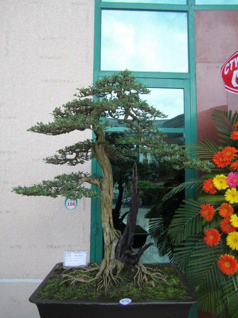 Vietnam International bonsai show - Page 3 7866_211