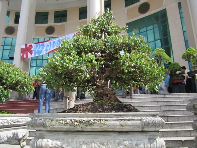 Vietnam International bonsai show - Page 3 9308_210