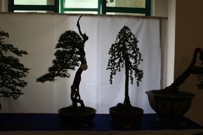 Vietnam International bonsai show Img_3013