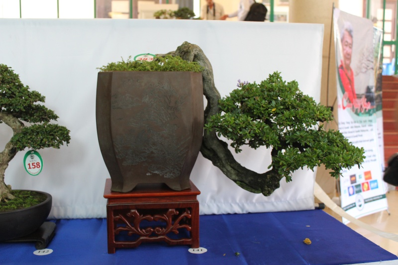 Vietnam International bonsai show Img_3014