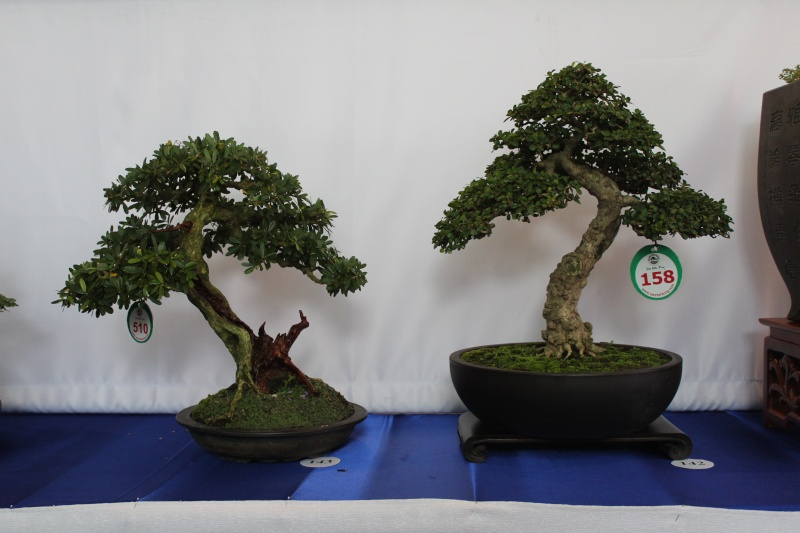 Vietnam International bonsai show Img_3015
