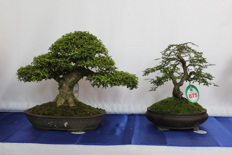 Vietnam International bonsai show Img_3016