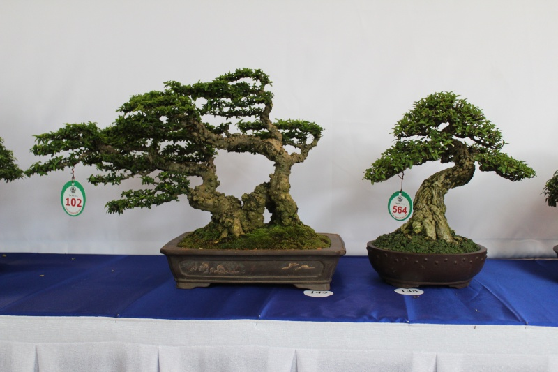 Vietnam International bonsai show Img_3018