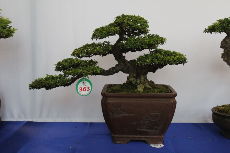 Vietnam International bonsai show Img_3019