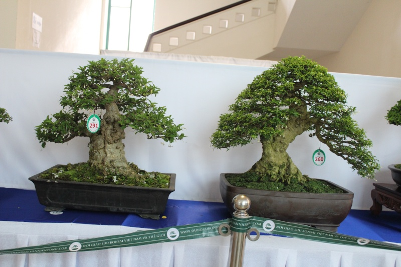 Vietnam International bonsai show Img_3020
