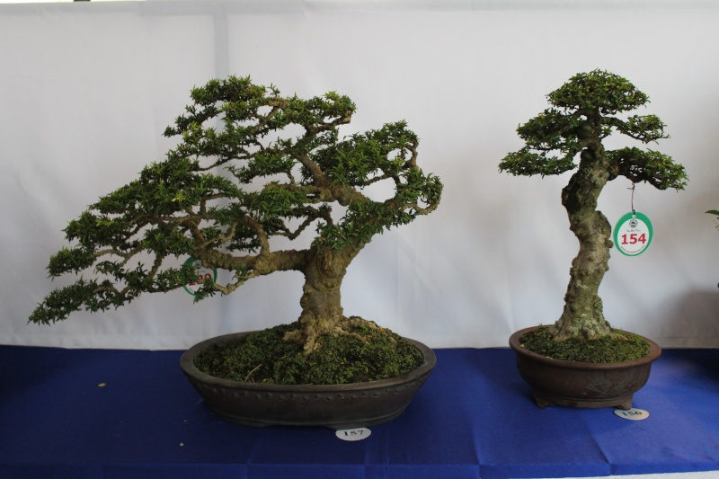 Vietnam International bonsai show Img_3021