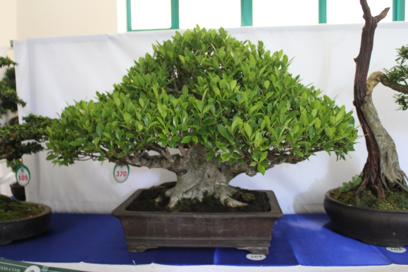 Vietnam International bonsai show Img_3022
