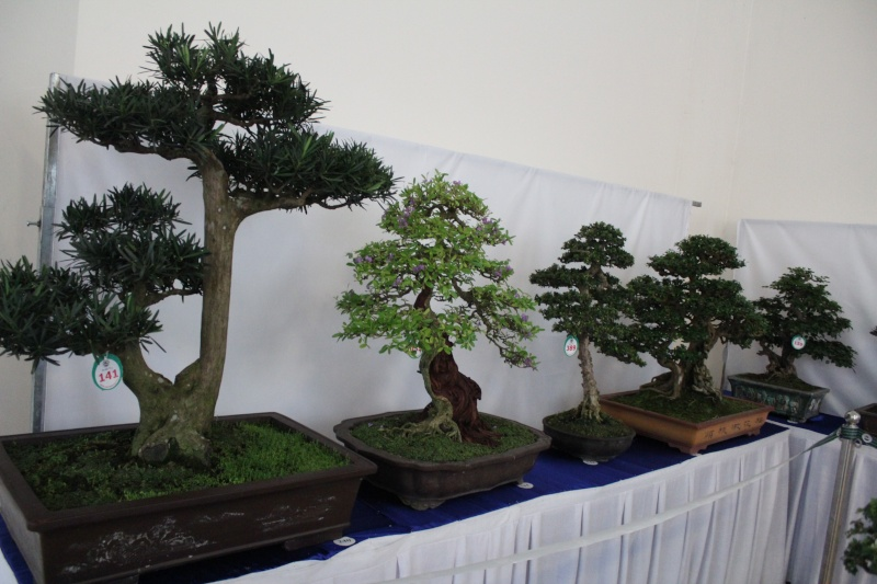Vietnam International bonsai show Img_3023