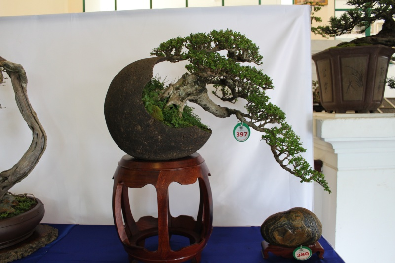 Vietnam International bonsai show Img_3110