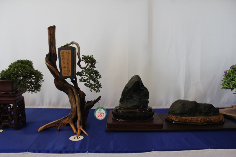Vietnam International bonsai show Img_3112