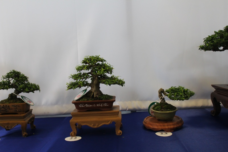 Vietnam International bonsai show Img_3113