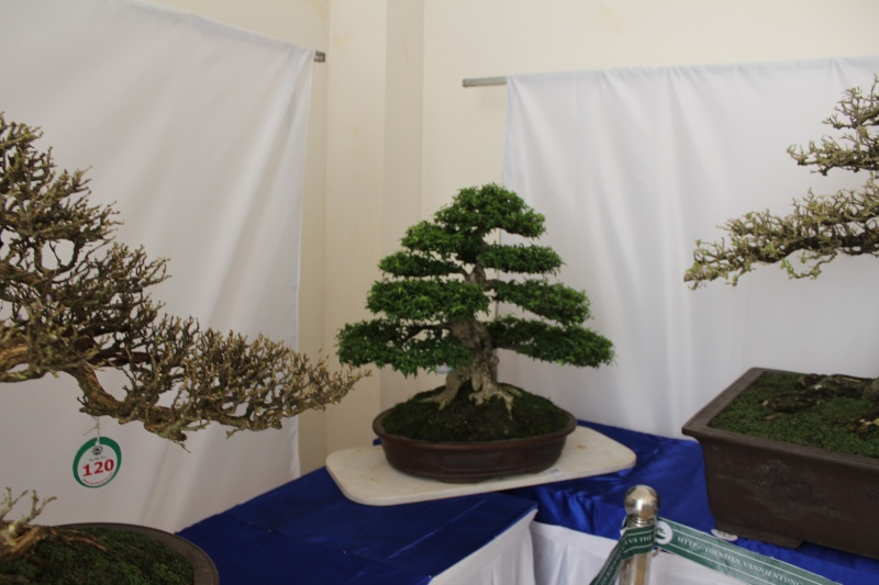 Vietnam International bonsai show - Page 2 Img_3118