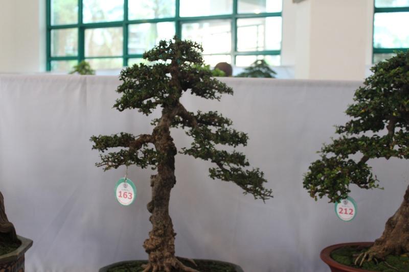 Vietnam International bonsai show - Page 2 Img_3319
