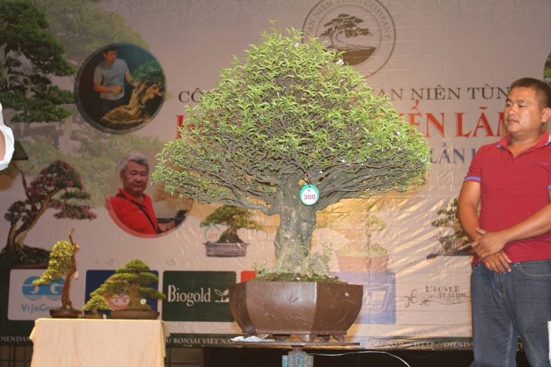 Vietnam International bonsai show Img_3412