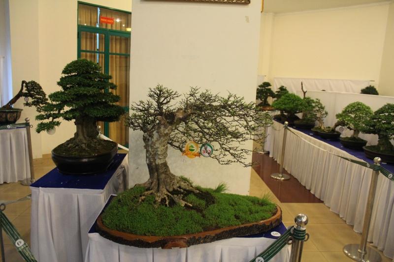 Vietnam International bonsai show - Page 2 Img_3514