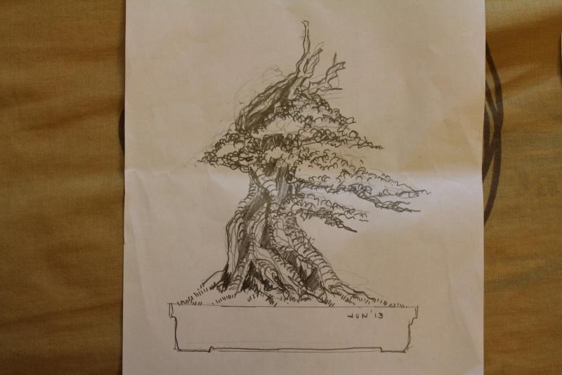 Philippines Ficus species (This has EVOLVED into new Pemphis Acidula Design ideas, my apologies) Img_3611