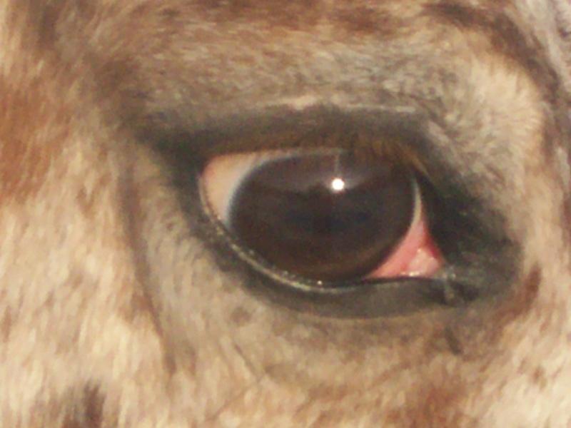 CONCOURS PHOTOS, L'oeil des chevaux ! 8110
