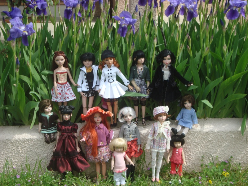Mes iris attirent du monde, histoire d'une belle rencontre Dsc00528