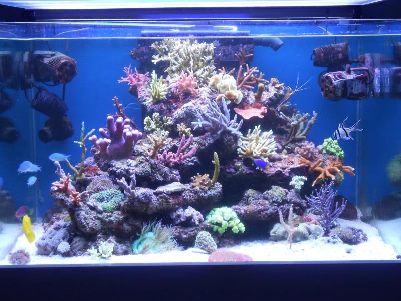 karlito's reef 2 - Page 5 Dscn1710