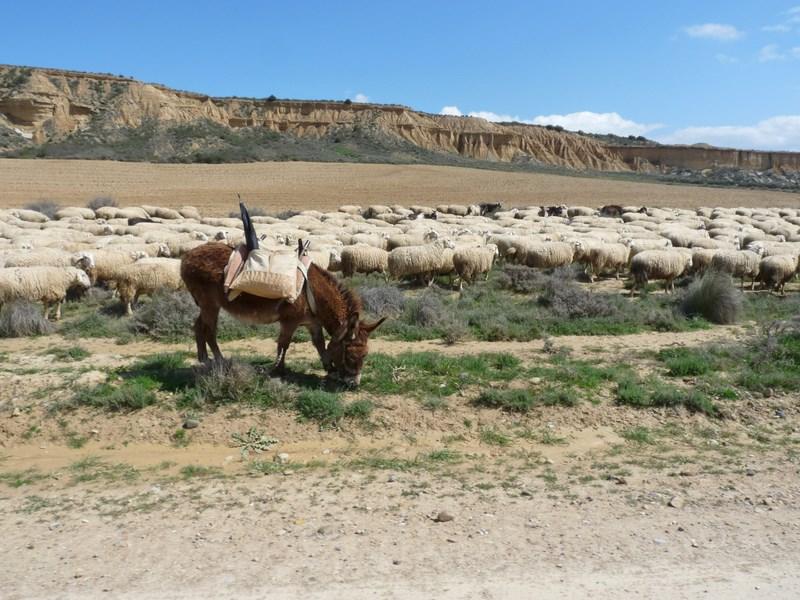 L'Espagne de Gijon à Jaca - du 1er au 8 Avril 2012 12_cop12