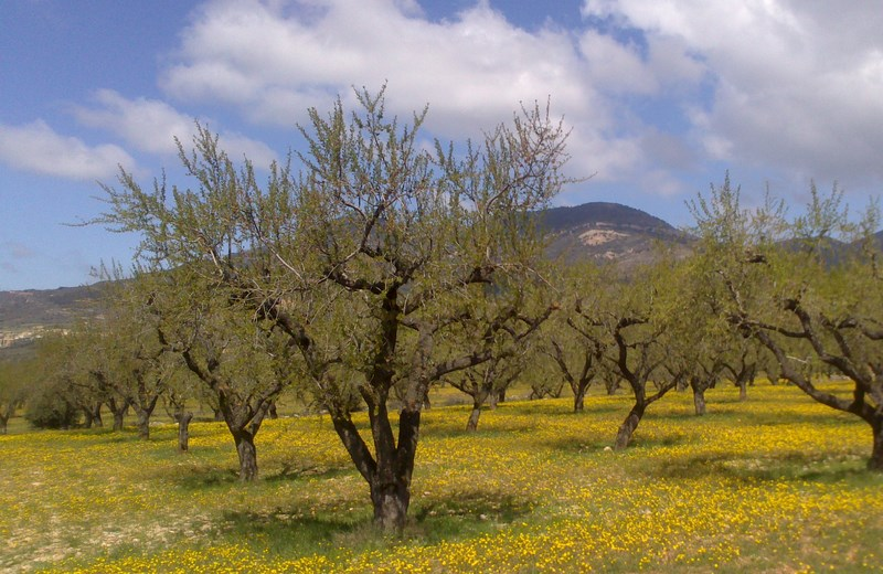 L'Espagne de Gijon à Jaca - du 1er au 8 Avril 2012 3_copi12
