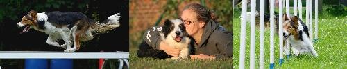 chien - Mon chien grogne contre mon mari... Signat10