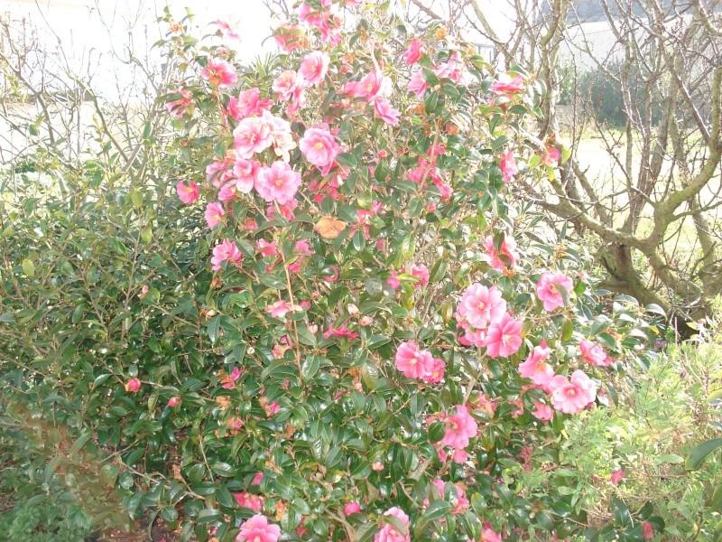 Le printemps arrive 2013-013