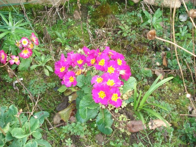 Le printemps arrive 2013-017
