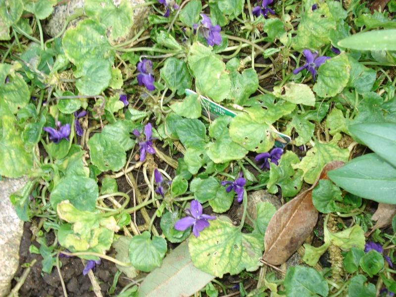 Le printemps arrive 2013-019