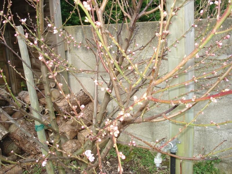 Le printemps arrive 2013-026