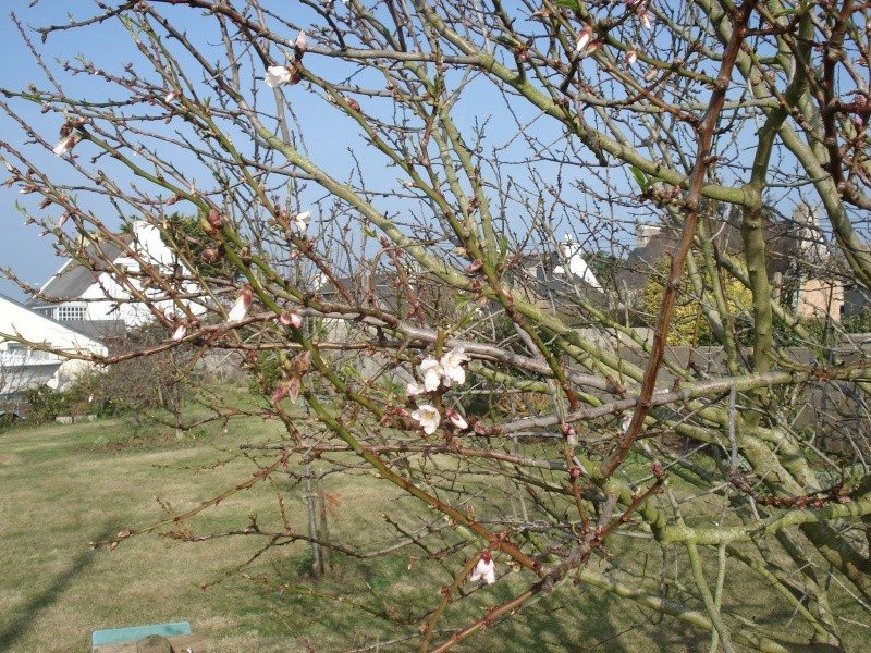 Le printemps arrive 2013-027