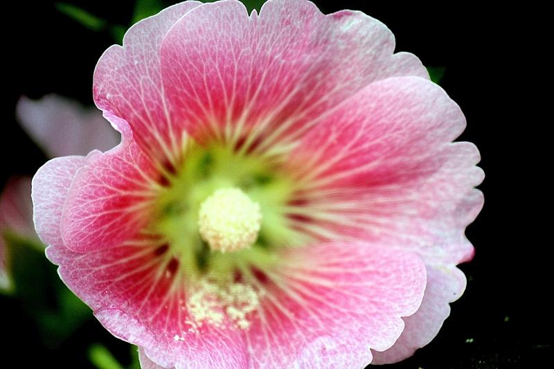 ดอกไม้ในสวน Img_0612
